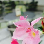 Biergarten-Le-Marron-Ambiente-Blumen