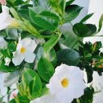 Le Marron Restaurant - Biergarten - Ambiente - Blumen