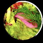 Bunter-Salatteller